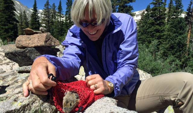 A Day in the Field with American Pika