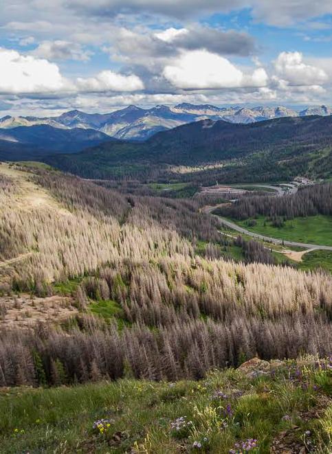 Wolf Creek Pass crop