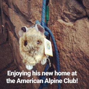 American Alpine pika