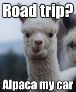 Road Trip? Alpaca my car