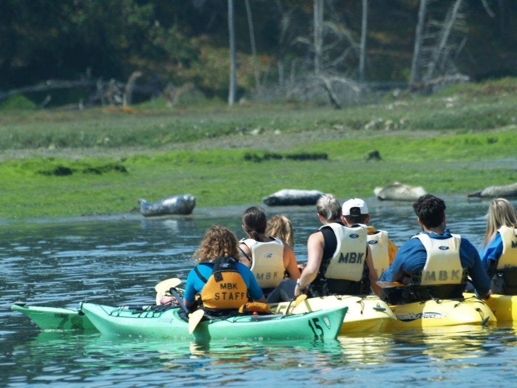 Kayakers looking at Seals