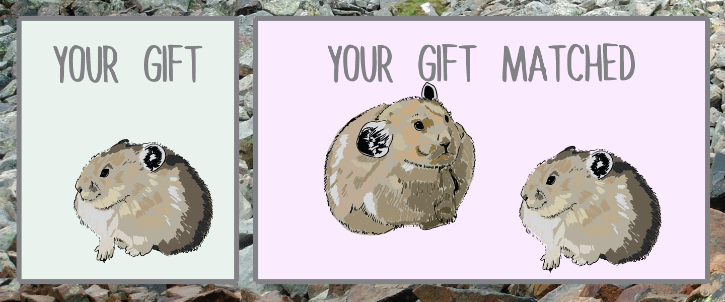 Your Gift Matched