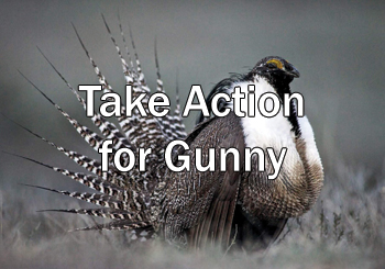 Take Action for Gunny