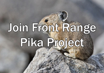 The Front Range Pika Project