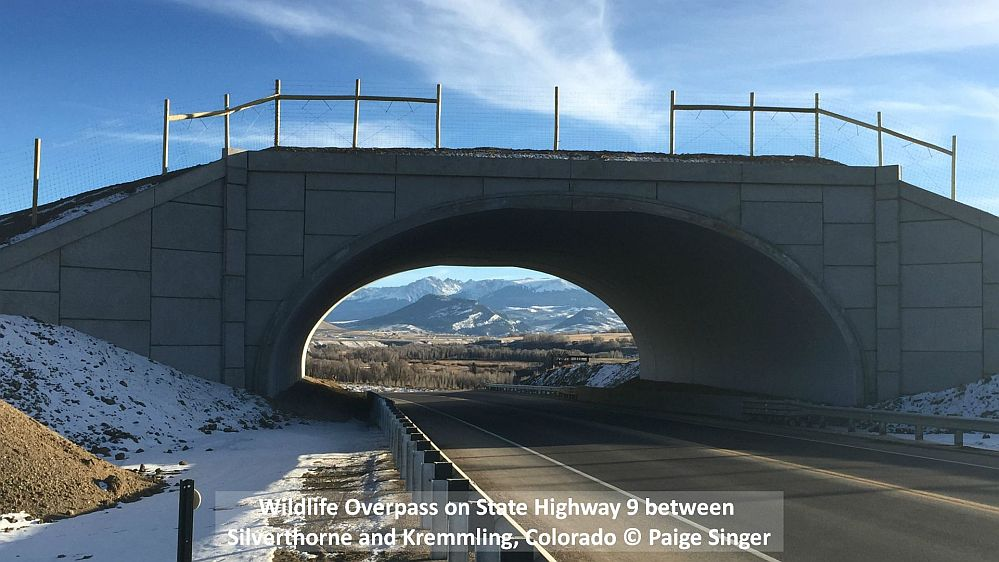 Wildlife Overpass on State Highway 9