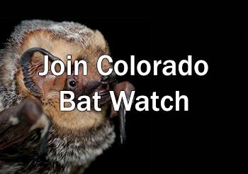 Colorado Bat Watch