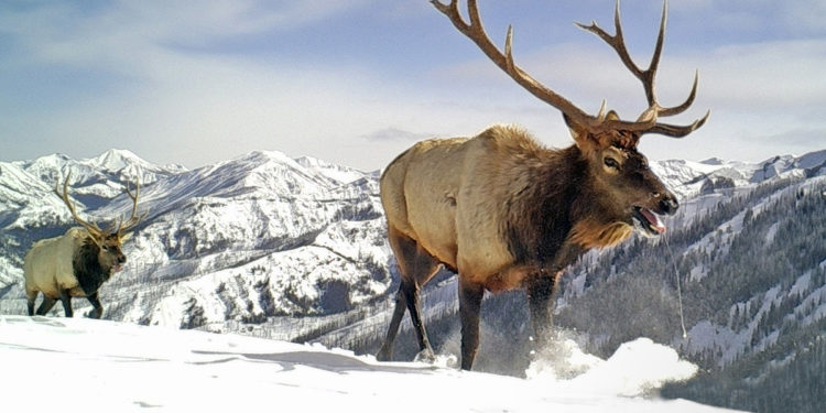PRESS RELEASE: Rocky Mountain Wild Releases Research and Online Tool Showing Interior Department's Destruction of Wildlife Corridors