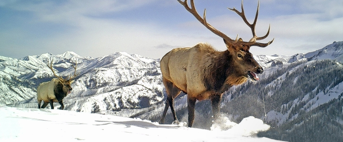 Stop energy leases in critical big game habitat