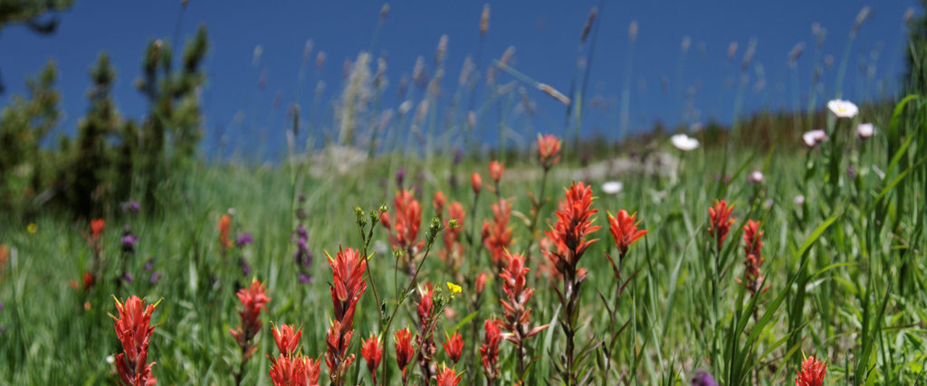 Flowers on the Wilder Gulch Trail, courtesy of Kimon Berlin.