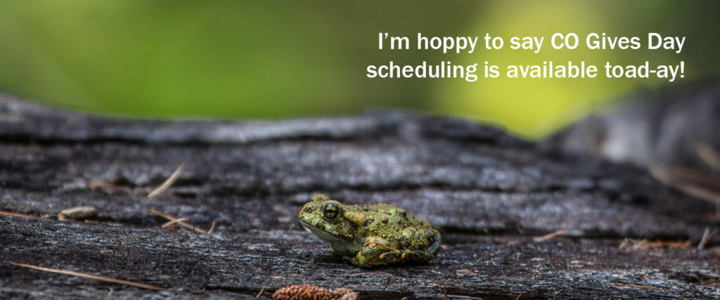 "A boreal frog on a piece of wood with the text ""I'm hoppy to say CO Gives Day scheduling is available toad-ay!"""
