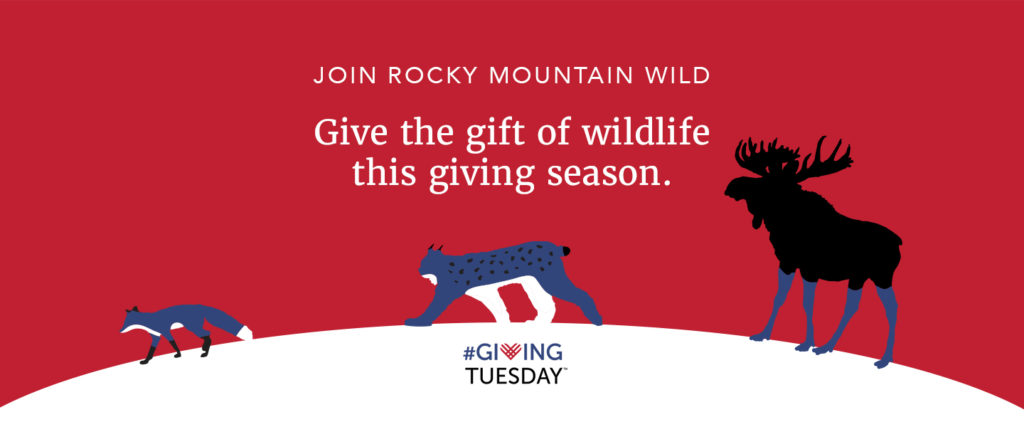 """Illustration that shows a red fox, Canada lynx, and moose crossing over a snowy landscape. Above them, text says """"Join Rocky Mountain Wild. Give the gift of wildlife this giving season."""" Below them is the #GivingTuesday logo."""