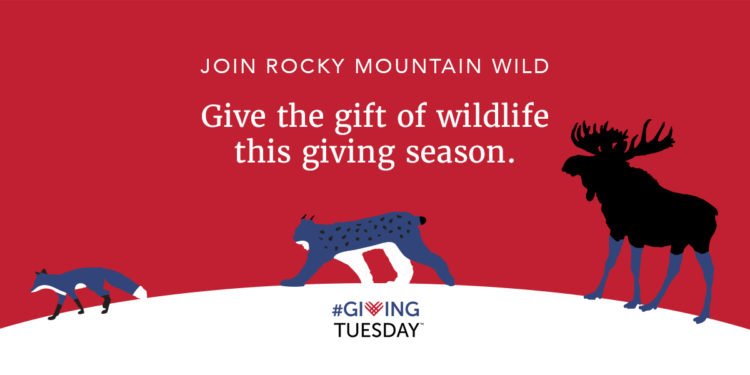 Gift the gift of wildlife this giving season.