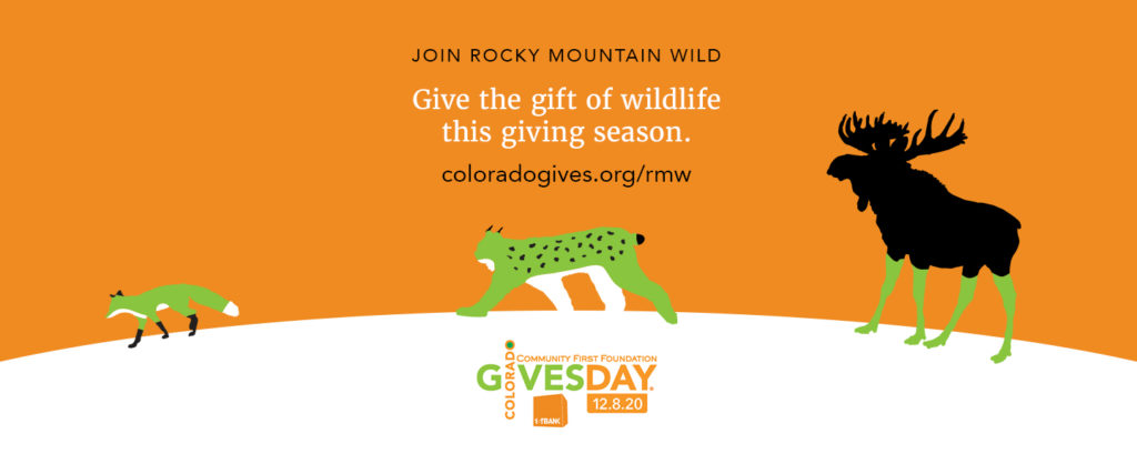 """Illustration that shows a red fox, Canada lynx, and moose crossing over a snowy landscape. Above them, text says """"Join Rocky Mountain Wild. Give the gift of wildlife this giving season."""" Below them is the Colorado Gives Day logo."""