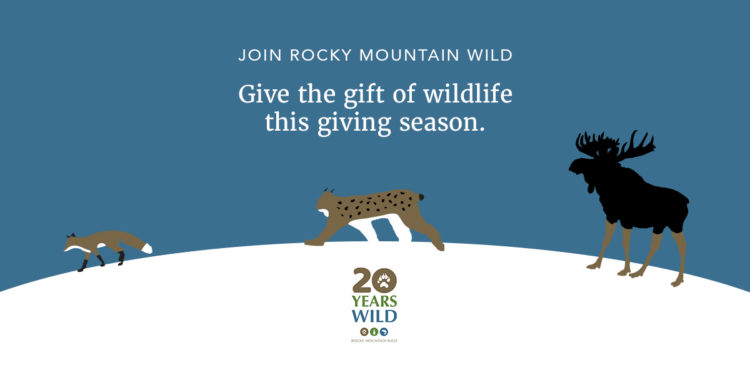 Give the gift of wildlife this giving season!