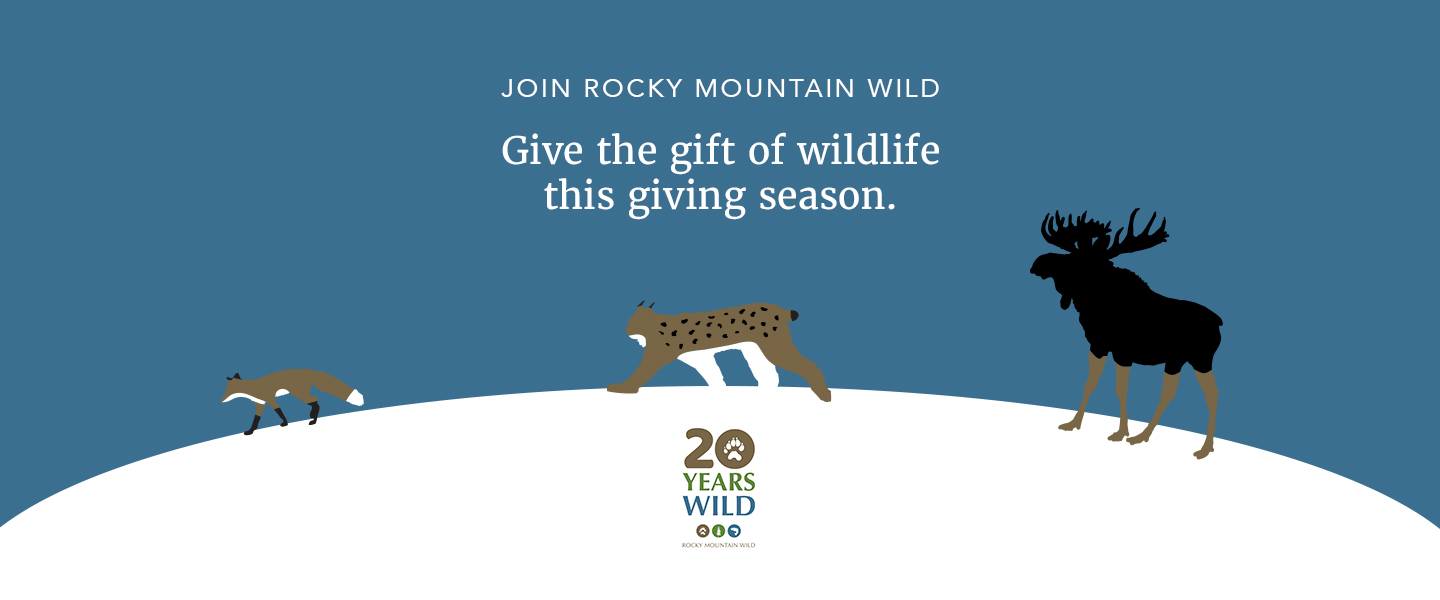 """Illustration that shows a red fox, Canada lynx, and moose crossing over a snowy landscape. Above them, text says """"Join Rocky Mountain Wild. Give the gift of wildlife this giving season."""" Below them is our 20th anniversary logo."""