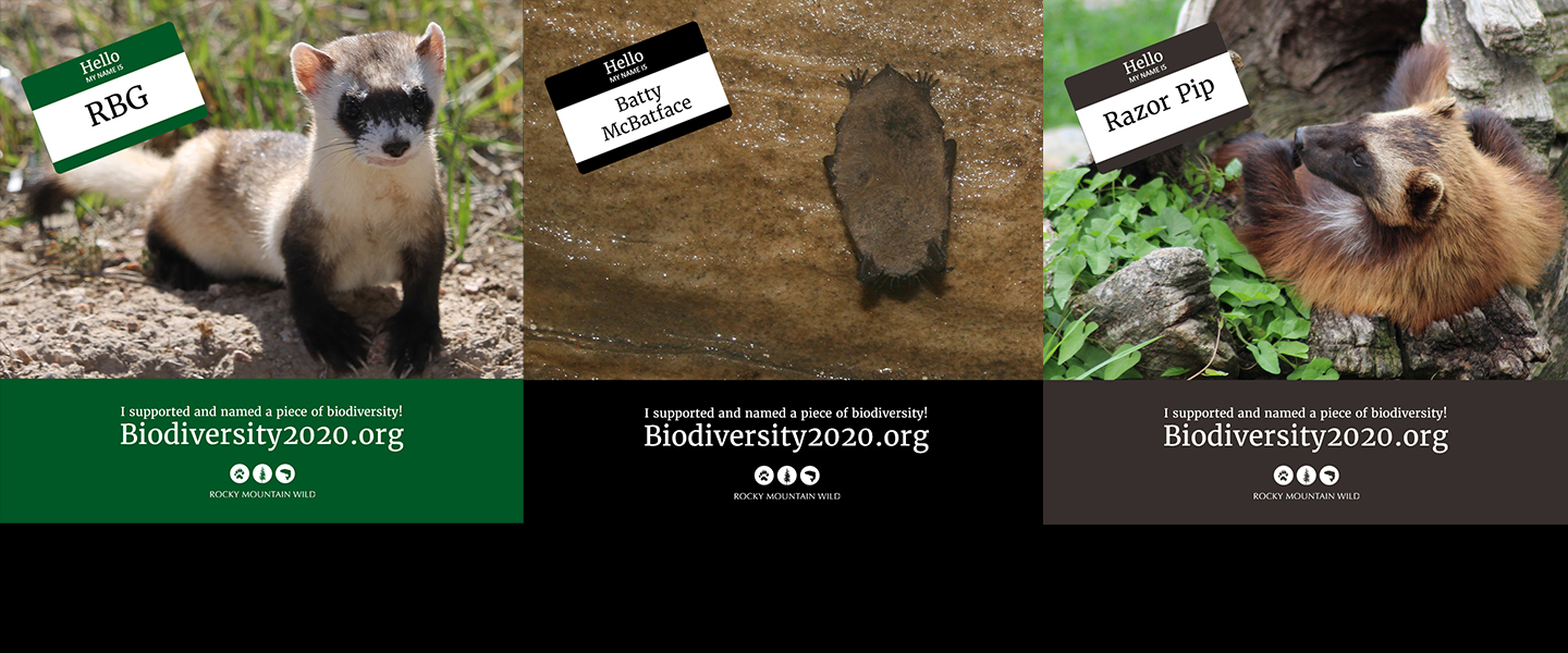 Donate and name a piece of biodiversity today!