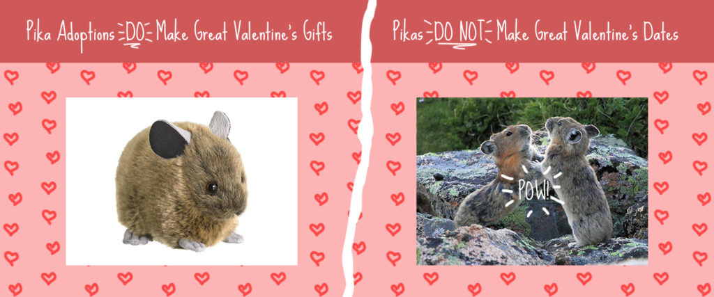 "Graphic with two sections. In the first section, there's a photo of a plush American pika with the heading ""Pika adoptions DO make great Valentine's gifts."" On the right is a picture of two pikas boxing with the heading ""Pikas DO NOT make great Valentine's dates."""