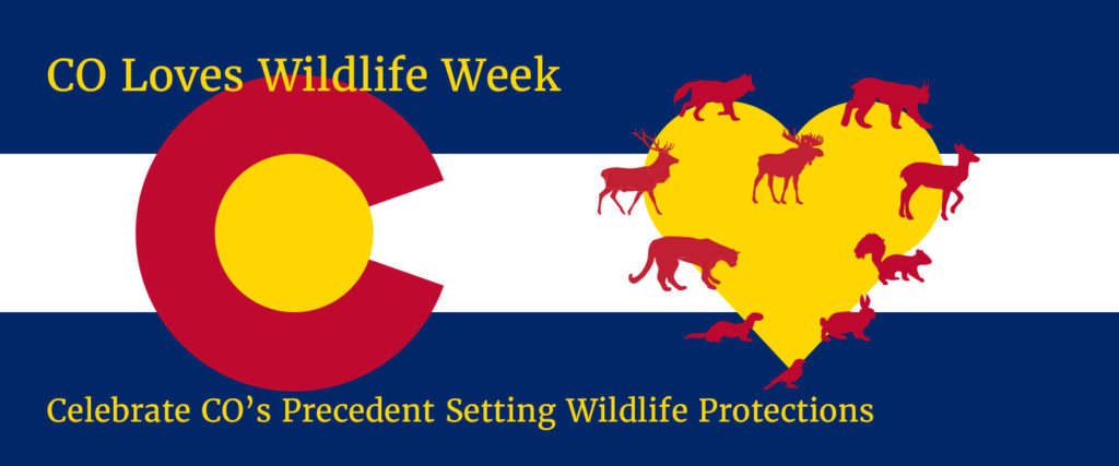 "Colorado flag next to a heart with different Colorado species lining the outside of it. Text says: ""CO Loves Wildlife Week, Celebrate CO's Precedent Setting Wildlife Protections."""