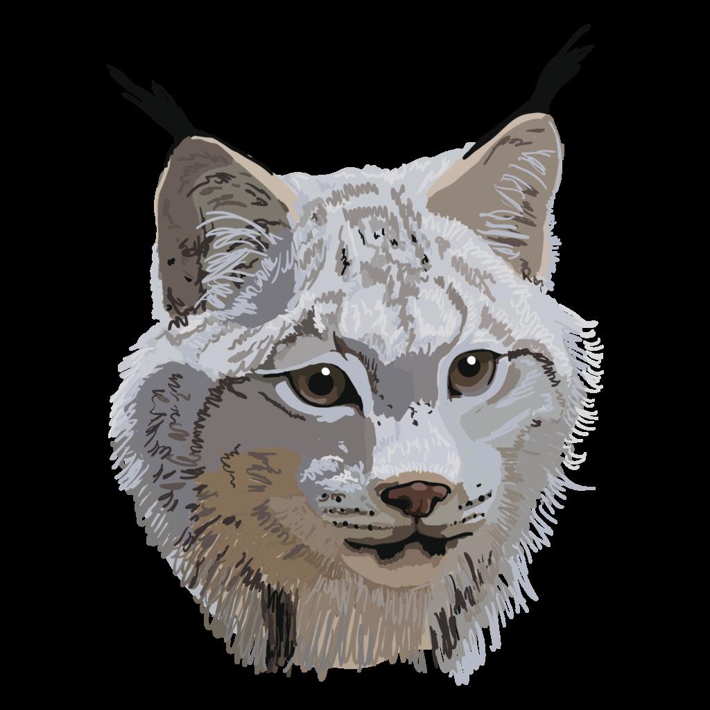 Canada lynx illustration by Chris Talbot-Heindl
