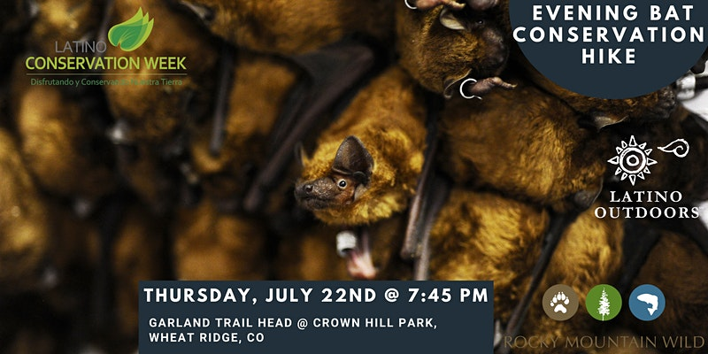 """A group of bats roosting with the logos for Latino Conservation Week, Latino Outdoors, and Rocky Mountain Wild overlaid. Text says """"Evening Bat Conservation Hike, Thursday, July 22nd at 7:45 pm, Garland Trail Head at Crown Hill Park, Wheat Ridge, CO."""